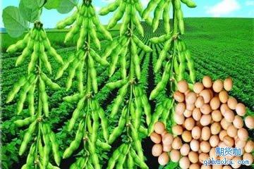 大豆期货是什么?
