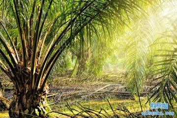 棕榈油期货的意义