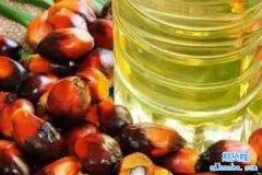 棕榈油期货交易时间是什么时候?棕榈油期货夜盘交易时间表
