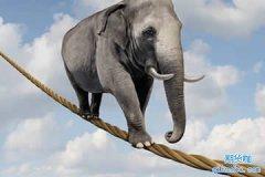 期货培训网:期货投资要坚守有效法则!