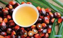 棕榈油期货开户流程_棕榈油开户需要多少钱?