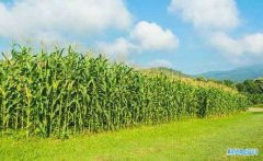 <b>最便宜的玉米手续费_做一手玉米期货手续费没多少钱!</b>