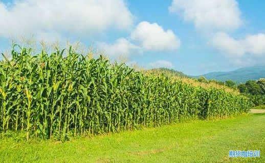 一手玉米期货手续费多少钱